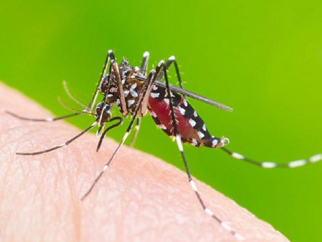 muỗi đốt gây sốt xuất huyết