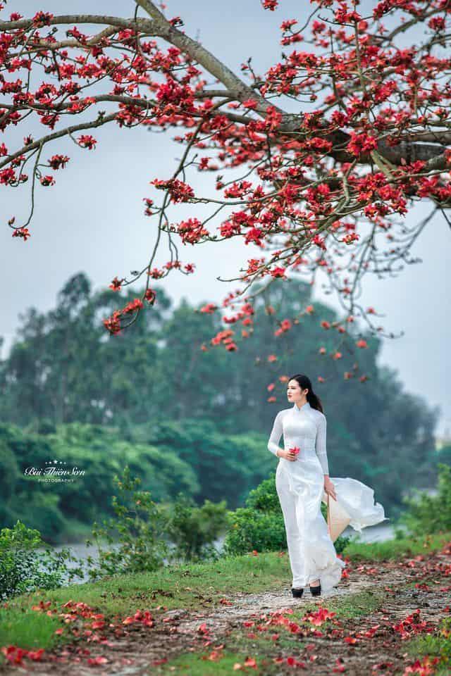 cây hoa gạo