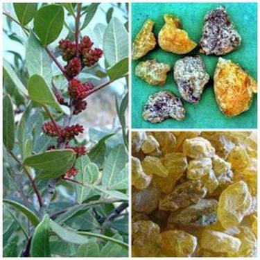 Nhũ hương (nhựa của cây nhũ hương) và một dược (nhựa của cây một dược) tác dụng hoạt huyết khứ ứ mạnh, trị bế kinh thống kinh, chấn thương ứ huyết…