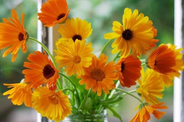7 loại hoa tốt cho sức khỏe nên trồng trong sân nhà
